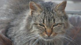 Unbefriedigte obdachlose Katze des Porträts Übel auf der Straßennahaufnahme schaut das Sitzen traurig stock footage