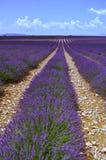 Unbegrenztes Lavendelfeld Stockbilder