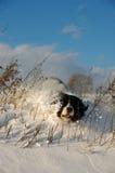Unbeholfener Hund und der Schnee Lizenzfreies Stockbild
