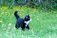 Unbeholfenes kleines Kätzchen auf stockbild