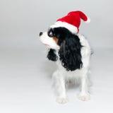 Unbekümmerter König Charles mit seiner Weihnachtsschutzkappe stockfoto