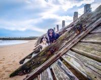 Unbekümmerter König Charles Spaniel am Strand Stockbilder