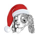Unbekümmerter König Charles Spaniel trägt Weihnachtsfeiertagshut Stockbilder