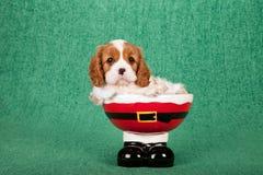 Unbekümmerter Welpe Königs Charles Spaniel, der innerhalb Sankt sitzt, keucht Stiefel rollen auf grünem Hintergrund Lizenzfreie Stockfotos