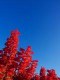Unbekannte rote Blume, machen Foto am Taipeh-Flussuferpark lizenzfreies stockfoto