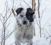 Unbekannter Hund Stockfoto