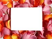 Unbelegte Karte auf den rosafarbenen und orange Blumenblättern Lizenzfreie Stockfotos
