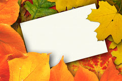 Unbelegte Karte umgeben durch schöne Herbstblätter stockbild