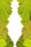 Unbelegter Hintergrund umgeben durch Rebeblätter Lizenzfreie Stockfotos