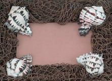 Unbelegtes Anschlagbrett mit 4 gestreiften Tritonshornshells Stockfotografie