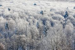 Unbelievable scene with snow covered forests. Winter forest of trees poured with snow that like fur shelters the mountain hills covered with snow. Fabulous royalty free stock images