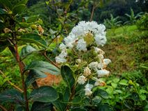 Unbemannte Blume Lizenzfreie Stockfotos