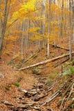 Unberührter Gebirgswald im Herbst stockfotografie