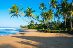 Unberührter tropischer Strand in Sri Lanka Lizenzfreie Stockbilder