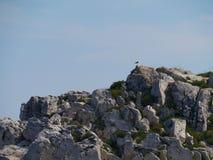 Unbewohnte kroatische Insel im Mittelmeer Lizenzfreie Stockfotografie