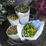 Unblown tulips in paper bags for sale in aluminum buckets next to flower shop Stock Image