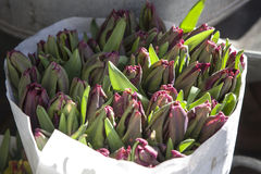 Unblown tulips in paper bags for sale in aluminum buckets next to the flower shop for sale Royalty Free Stock Photo