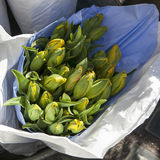 Unblown tulips in paper bags for sale in aluminum buckets next to the flower shop Stock Images