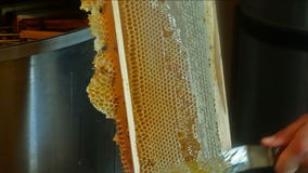 Uncapping frame of honey. Male hands uncapping frame of honey stock footage