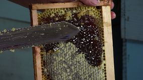 Uncapping frames. Ray release of filled honey prior to extraction stock footage
