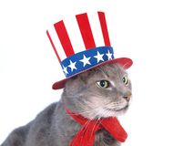 Uncle Sam cat. The cat with a uncle Sam costume stock images