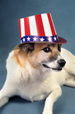 Uncle Sam Dog. Stock Image
