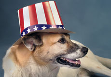 Uncle Sam Dog. Royalty Free Stock Photo