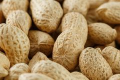 Uncleaned inshell peanuts. Peanuts, for background or textures. stock photo