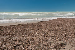 Uncleared beach in low season, Italy Stock Images