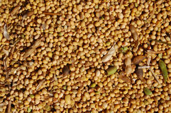 uncleared soybeans Royaltyfria Bilder