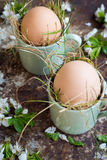 Uncolored natural easter eggs in green espresso cups, happy easter concept with white spring flowers Stock Images