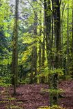 Uncontaminated forest Stock Photo