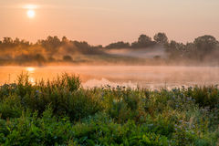 Uncontrolled vegetation. Uncontrolled wild vegetation by a lake. The sun is rising and the wildlife is active Royalty Free Stock Images