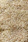 Uncooked коричневый рис Стоковые Изображения RF