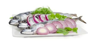 Uncooked Atlantic mackerel, onion and potherb on a white dish. Three uncooked Atlantic mackerel with round slices of red onion, twigs of dill and cilantro on big Stock Photos