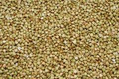 Uncooked buckwheat seeds Royalty Free Stock Photography