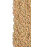 Uncooked buckwheat Stock Image