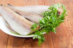 Uncooked carcasses of the Alaska pollock with parsley closeup Stock Images