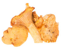 Uncooked Chanterelles on white Stock Photography