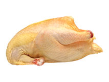 Uncooked chicken. Stock Photos