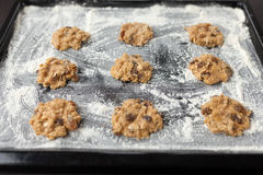 Uncooked cookies on baking tray. Uncooked oatmeal cookies with raisins on baking tray Royalty Free Stock Photography