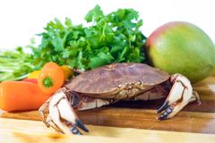 Uncooked crab with other food ingredients. Uncooked crab in the bowl getting ready to be cooked with other food ingredients such as pepper and cilantro Royalty Free Stock Photos