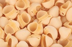 Uncooked delicious italian pasta lumaconi. Royalty Free Stock Image
