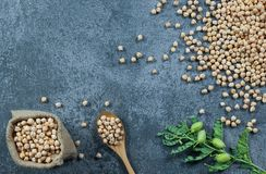 Uncooked dried chickpeas in burlap sack with raw green chickpea pod plant on rustic table. Heap of legume chickpea background royalty free stock photos