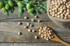 Uncooked dried chickpeas in burlap sack with raw green chickpea pod plant on wooden table. Heap of legume chickpea background stock photo