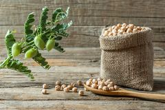 Uncooked dried chickpeas in burlap sack with raw green chickpea pod plant on wooden table. Heap of legume chickpea background stock images