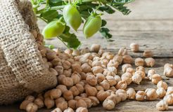 Uncooked dried chickpeas in burlap sack with raw green chickpea pod plant on wooden table. Heap of legume chickpea background royalty free stock photo