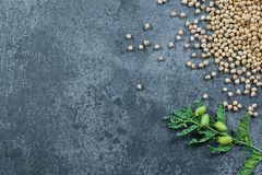 Uncooked dried chickpeas with raw green chickpea pod plant on rustic table. Heap of legume chickpea background royalty free stock image