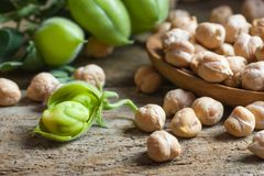 Uncooked dried chickpeas in wooden spoon with raw green chickpea pod plant on wooden table. Heap of legume chickpea background stock images