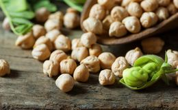 Uncooked dried chickpeas in wooden spoon with raw green chickpea pod plant on wooden table. Heap of legume chickpea background stock photography